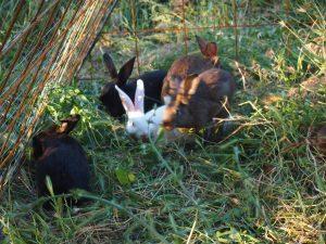 Più movimento per conigli sani